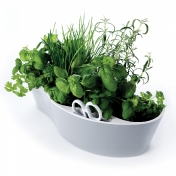 Royal VKB: Brands - Royal VKB - Herb Garden Cup